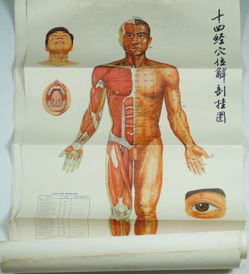 6 Cartazes de Acumpuntura
