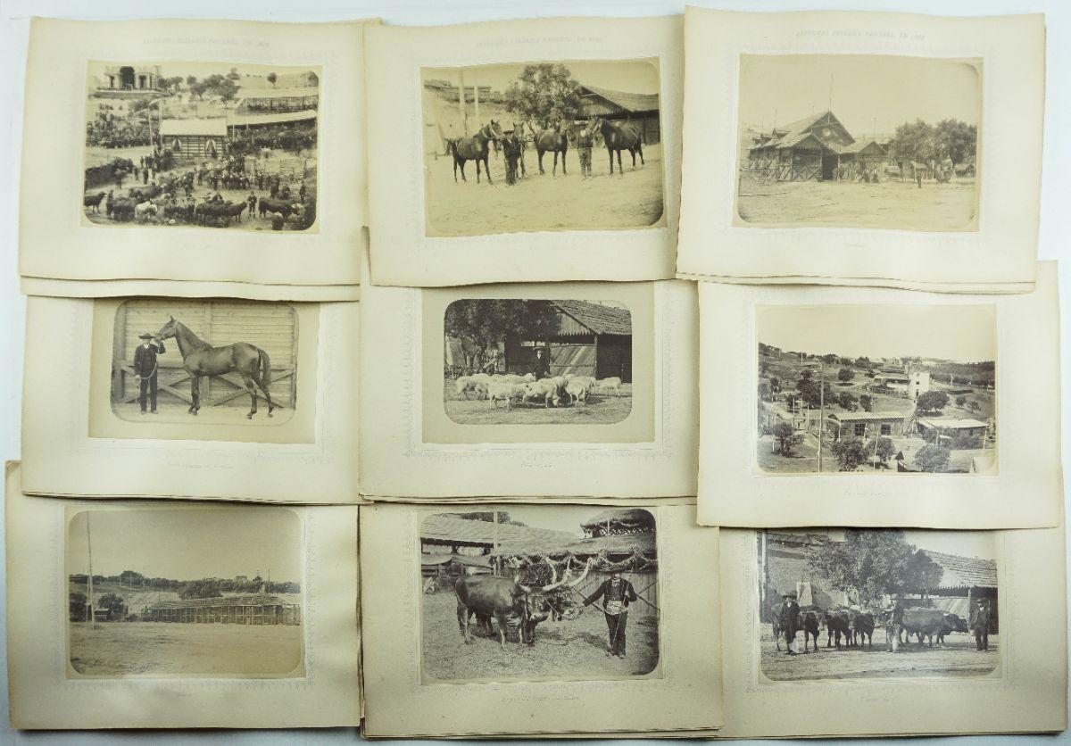 Exposição pecuária Nacional. 1888.