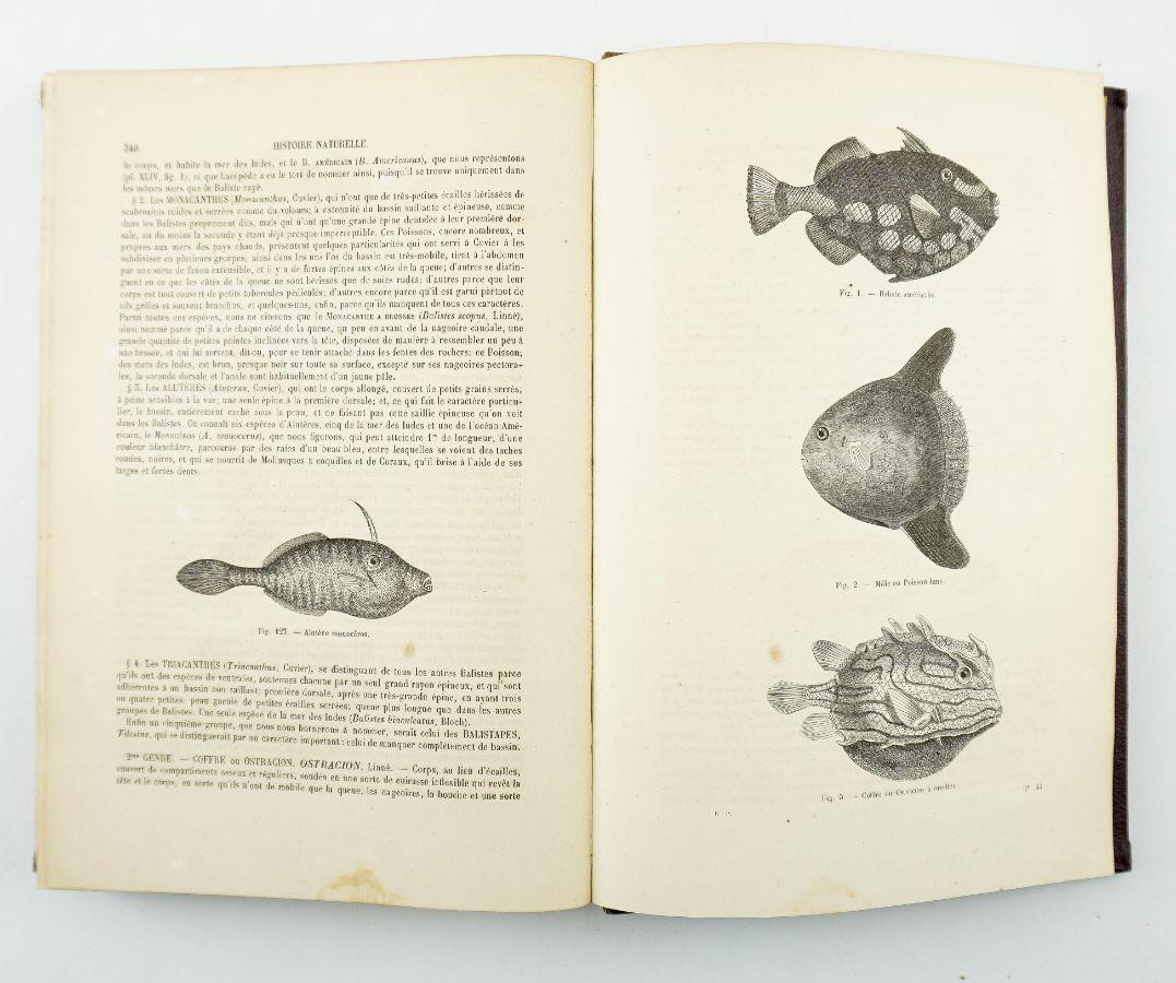 L'Encyclopedie Naturelle ou Traité Complet de Cette Sciene