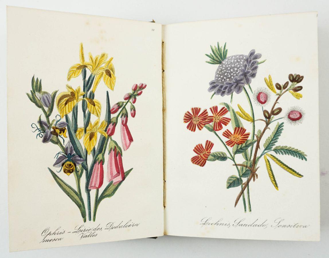 Diccionário da Linguagem das Flores