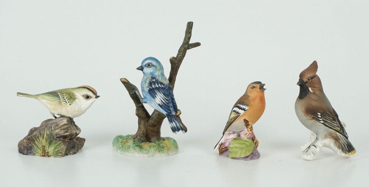 10 Pássaros